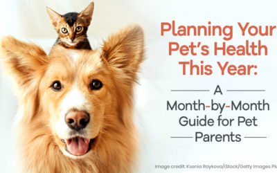 Planning Your Pet's Health This Year: A Month-by-Month Guide for Pet Parents